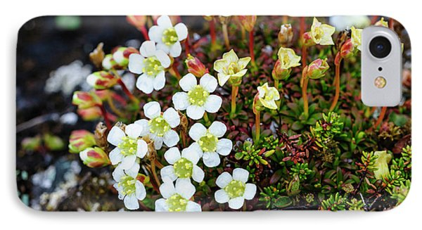 Norway Lapland Diapensia (diapensia IPhone Case by Fredrik Norrsell