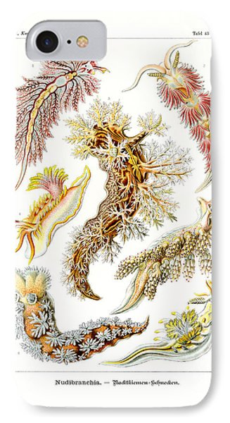 Nudibranchia IPhone Case by Ernst Haeckel