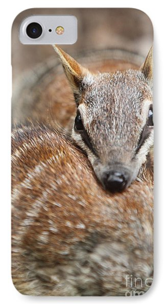 Numbats IPhone Case by Craig Dingle