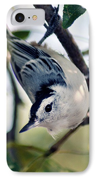Nuthatch 623 IPhone Case