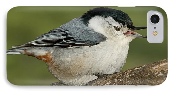 Nuthatch Phone Case by Bill Wakeley