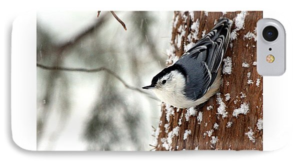 Nuthatch In Snow Storm IPhone Case by Paula Guttilla
