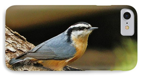 IPhone Case featuring the photograph Nuthatch Pose by VLee Watson