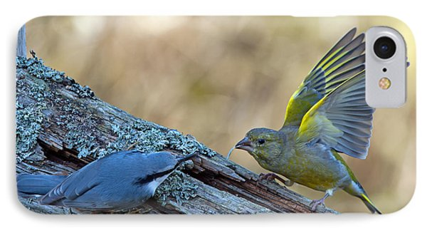 Nuthatch Vs Greenfinch IPhone Case by Torbjorn Swenelius