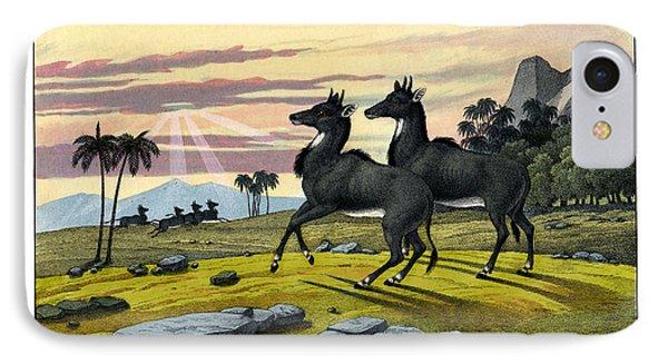 Nylghau IPhone Case by Splendid Art Prints