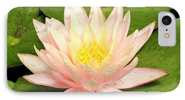 Nymphaea 'cypriana' IPhone Case