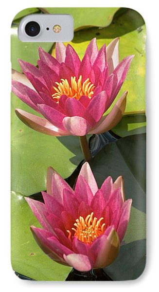 Nymphaea 'weymouth Red' IPhone Case