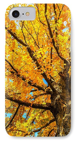 IPhone Case featuring the photograph Oak In The Fall by Mike Ste Marie