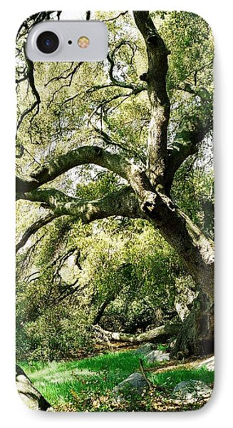 IPhone Case featuring the photograph Oak Spirit by Kathy Bassett