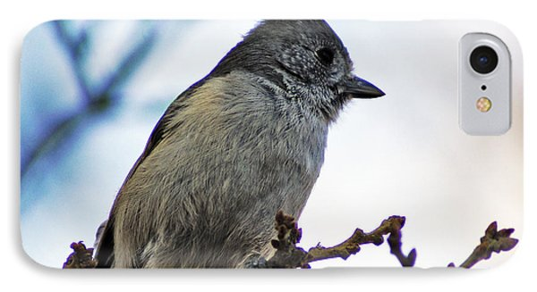 Oak Titmouse IPhone Case by Gary Brandes