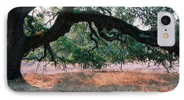 Oak Tree On A Field, Sonoma County IPhone Case by Panoramic Images