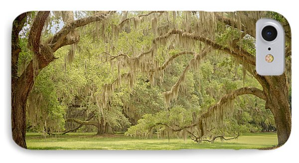 Oak Trees Draped With Spanish Moss Phone Case by Kim Hojnacki