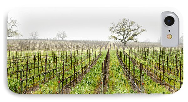 Oak Trees In A Vineyard, Guerneville IPhone Case by Panoramic Images