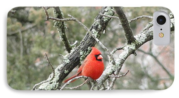 Observing Cardinal IPhone Case by Cindy Croal