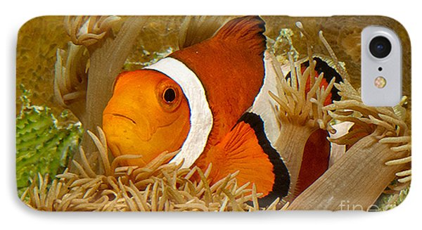 Ocellaris Clown Fish No 1 Phone Case by Jerry Fornarotto