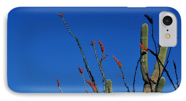 Ocotillo And Saguaro IPhone Case by Diane Lent