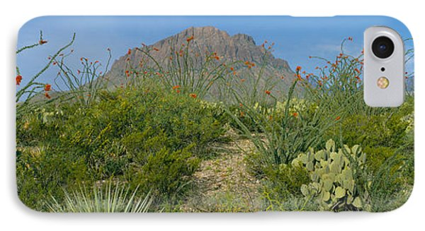 Ocotillo Plants In A Park, Big Bend IPhone Case