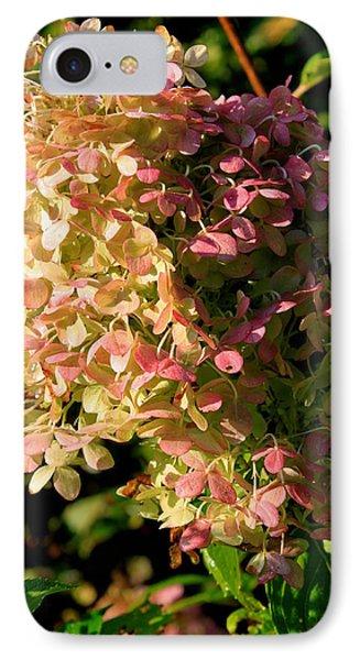 October Hydrangea IPhone Case by Hanne Lore Koehler