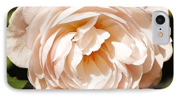 October Rose IPhone Case by Al Fritz