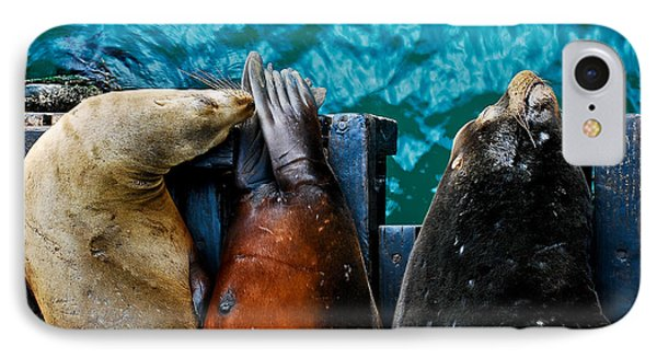 Odd Man Out California Sea Lions IPhone Case by Terry Garvin