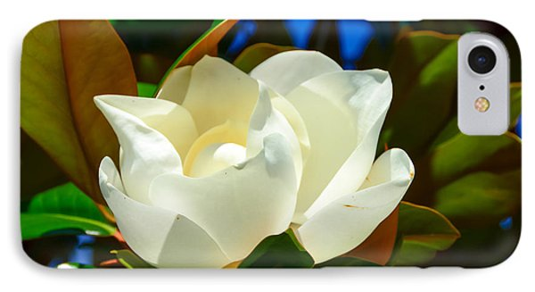 Oh Sweet Magnolia IPhone Case by Debra Martz