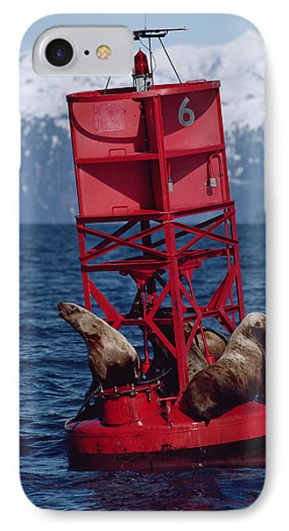 Oil Stained Stellers Sea Lions Prince IPhone Case by Flip Nicklin