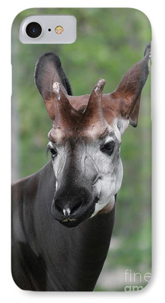 IPhone Case featuring the photograph Okapi #2 by Judy Whitton