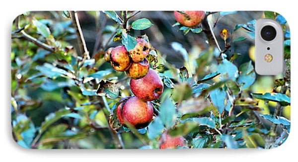 IPhone Case featuring the photograph Old Apples by Linda Cox