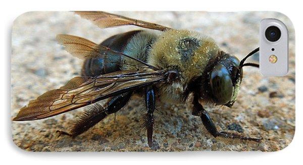 IPhone Case featuring the photograph Old Carpenter Bee by Pete Trenholm