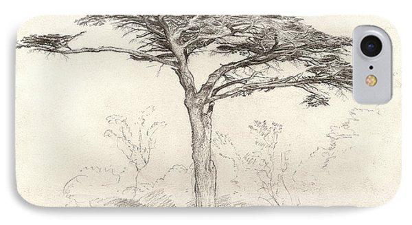 Old Cedar Tree In Botanic Garden Chelsea IPhone Case by Samuel Palmer