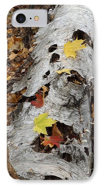 Old Fallen Birch IPhone Case by Erick Schmidt