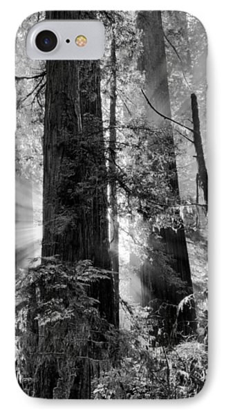 Old Growth Forest Light Black And White IPhone Case by Leland D Howard
