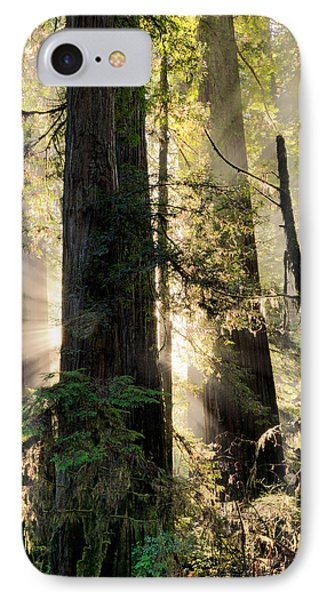 Old Growth Forest Light IPhone Case by Leland D Howard