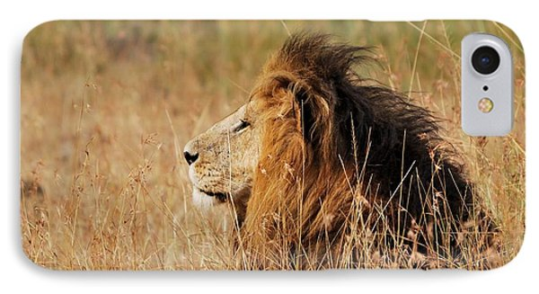 Old Lion With A Black Mane Phone Case by Alan Clifford