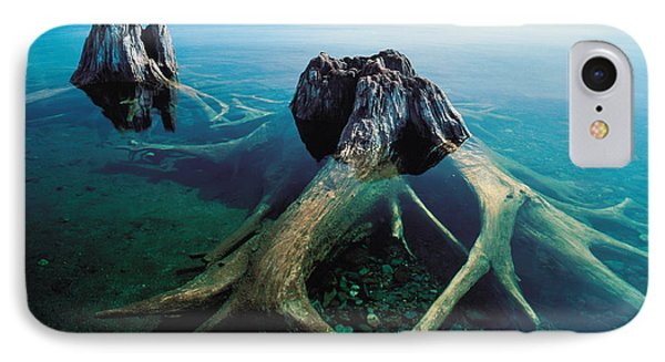 Old Tree Trunks Underwater IPhone Case by Panoramic Images