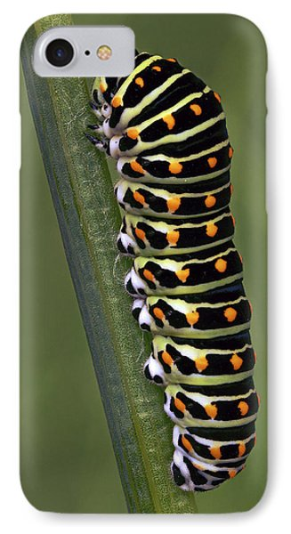 Oldworld Swallowtail Butterfly IPhone Case by Frans Hodzelmans