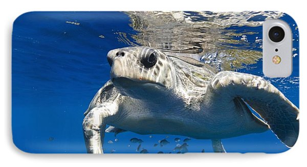 Olive Ridley Turtle IPhone Case by Christopher Swann