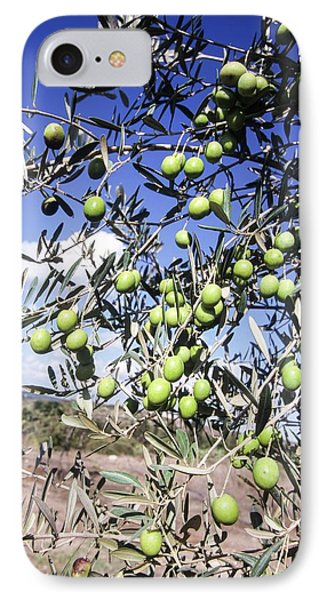 Olive Tree IPhone Case by Photostock-israel