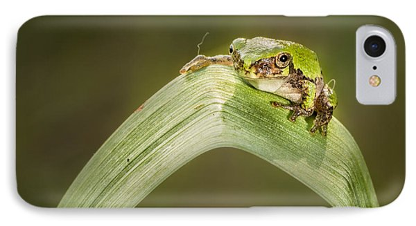 On A Leaf Phone Case by Timothy Hacker