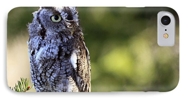 On Alert Majestic Eastern Screech Owl  Phone Case by Inspired Nature Photography Fine Art Photography