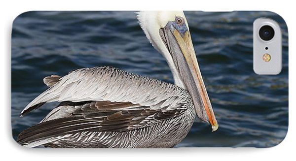 On The Edge - Brown Pelican Phone Case by Kim Hojnacki