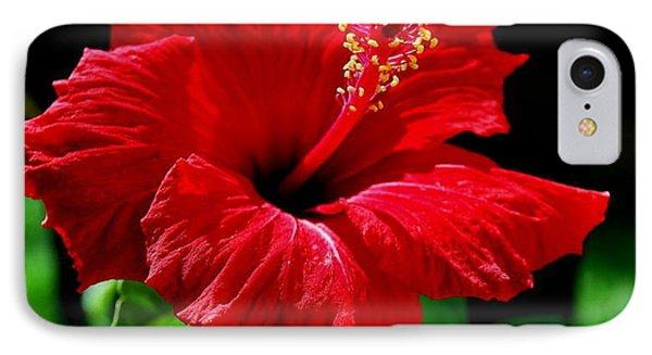 One Day Flower IPhone Case by Marija Djedovic