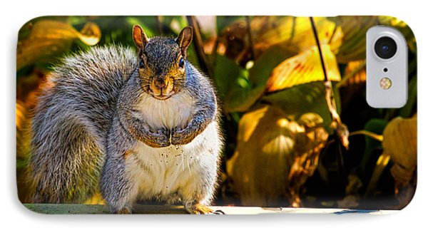 One Gray Squirrel IPhone 7 Case by Bob Orsillo