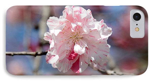 One Pink Blossom Phone Case by Carol Groenen