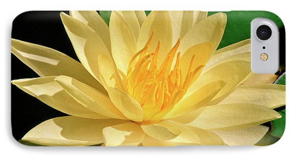 One Water Lily  IPhone Case by Ed  Riche