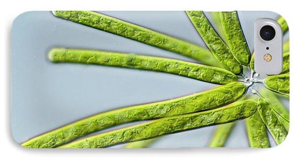 Ophiocytium Sp. Heterokont Alga IPhone Case by Gerd Guenther