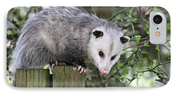 Opossum 2 Phone Case by Angie Vogel