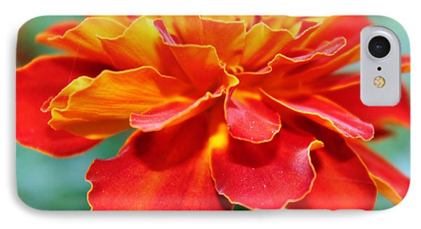 Orange And Yellow Marigold IPhone Case by Judy Palkimas