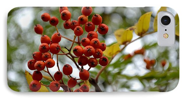 IPhone Case featuring the photograph Orange Autumn Berries by Scott Lyons