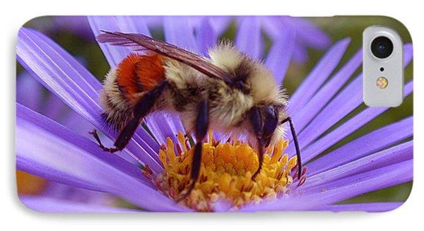 Orange-banded Bee IPhone 7 Case